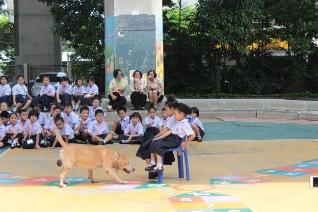 การสาธิตการฝึกสุนัขตำรวจ